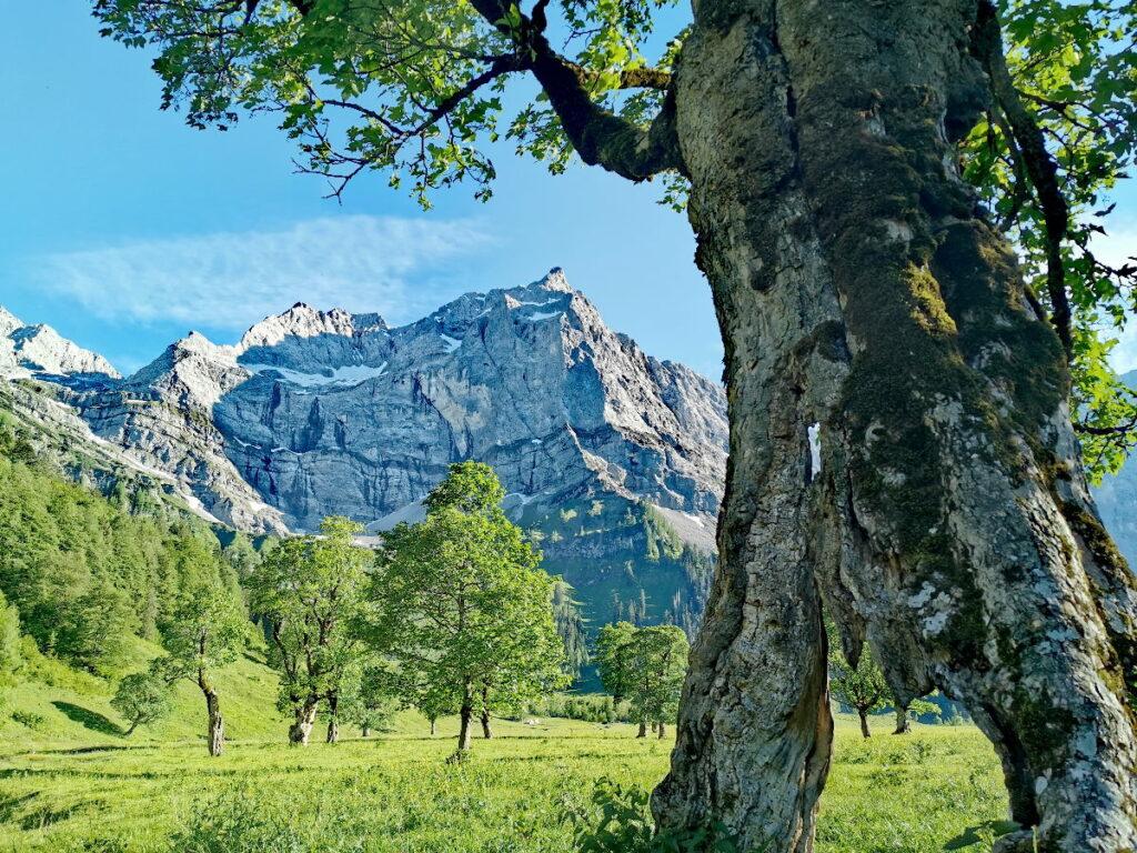 Top - Österreich Sehenswürdigkeiten in der Natur: Großer Ahornboden in Tirol