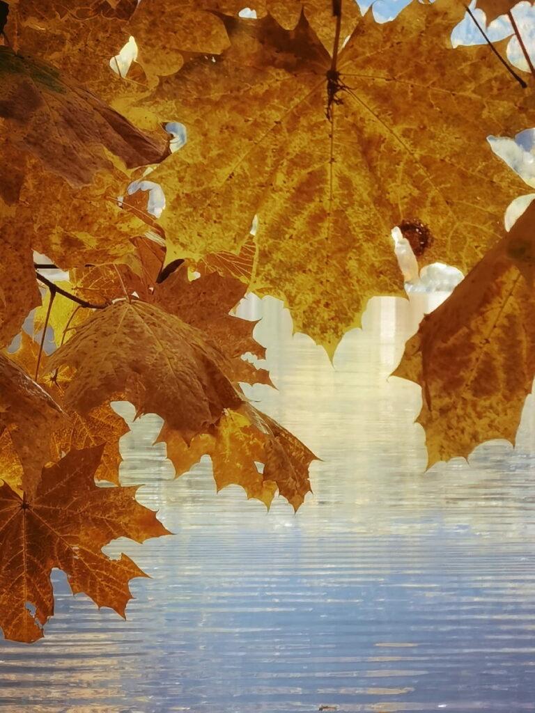 Österreich Urlaub mit den goldgelb gefärbten Blättern - ein Traum im Herbst!